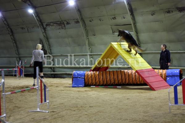 http://www.budkahome.ru/wp-content/uploads/2015/05/gorka_agility2.jpg