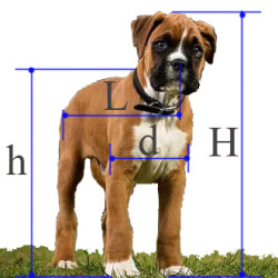 фото размеры собак