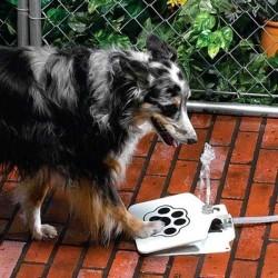фото поилка для собак