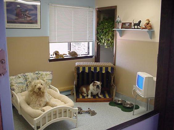Как сделать комнату для собак