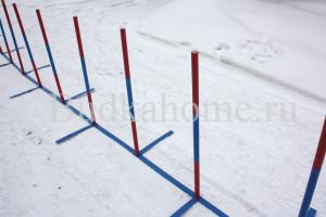 agility_slalom10