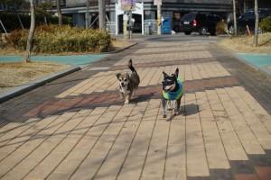 puppy-656215_640