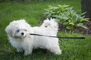 фото собака и ошейник3