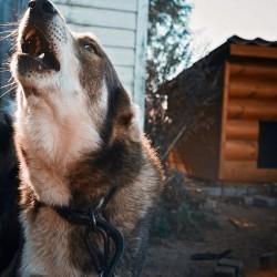 фото собака и будка