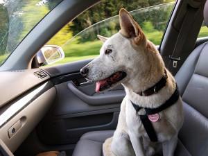 фото путешествие с собакой