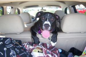фото путешествие с собакой2