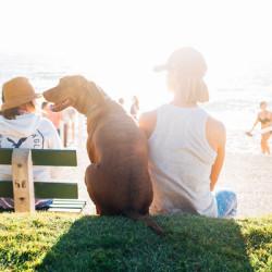 фото путешествие с собакой7