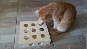 фото игрушка для кошки