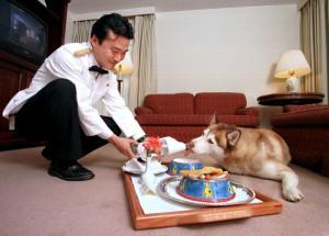 фото гостиница для собак