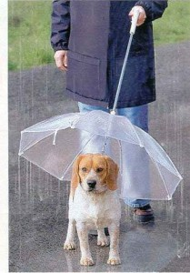 фото зонт для собаки