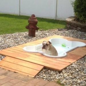 фото бассейн для животных