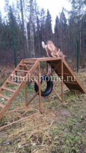 фото тренировка для собак