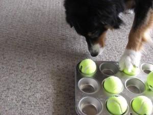 фото игрушка для собаки