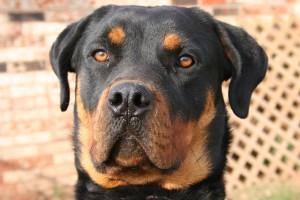 dog-371945_640