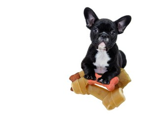 фото щенок с лакомством