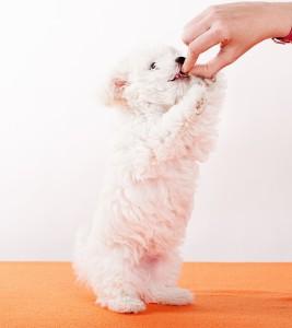 фото лакомства собаки