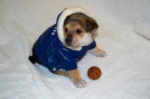 фото собака в одежде