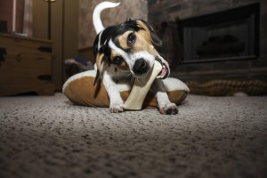 фото игрушка собаки