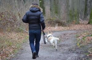 фото прогулка с собакой3