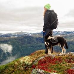 фото прогулка с собакой4