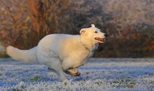 фото прогулка с собакой5