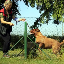фото дрессировка собаки2
