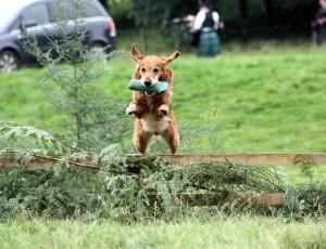 фото дрессировка собаки