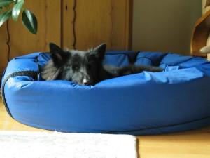 фото собака на подстилке