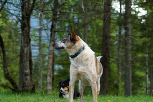 фото собака2