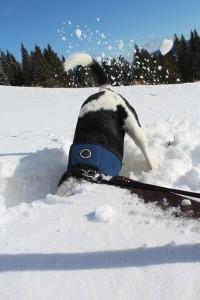 фото собака роет нору