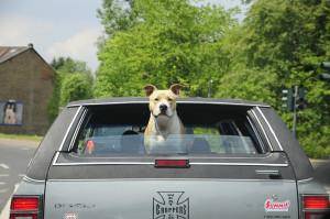 фото путешествие с собакой3