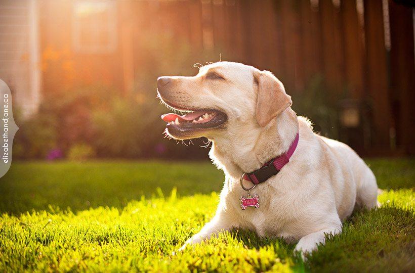 собака лежит на солнце