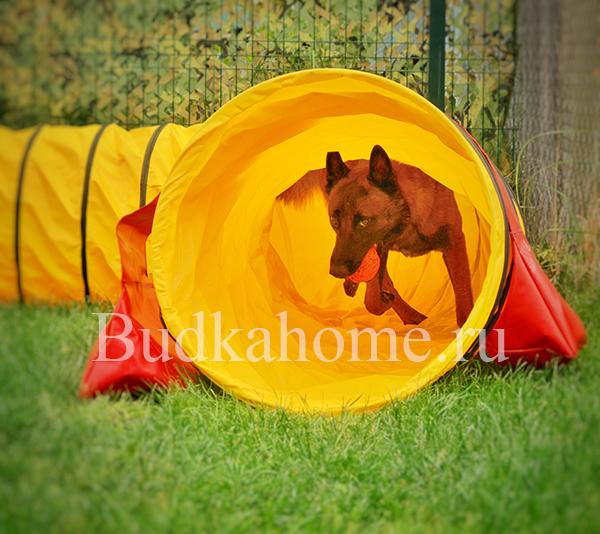 фото жесткий туннель и собака